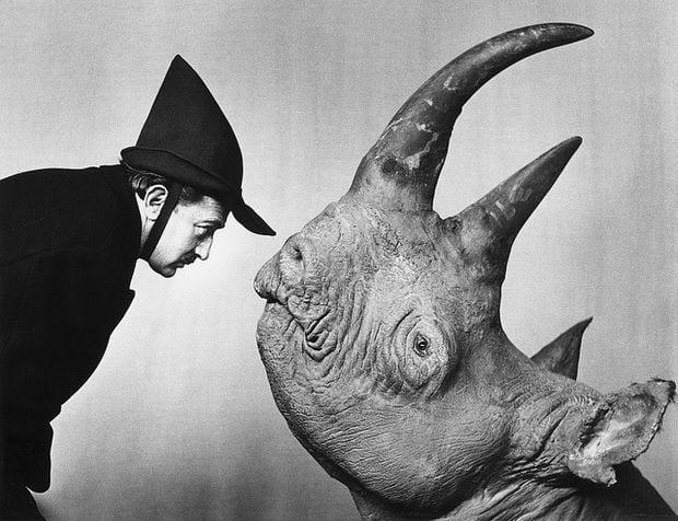 dali y un rinoceronte