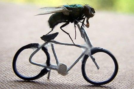 mosca en bici