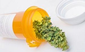 tratamiento marihuana