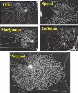 arañas y drogas