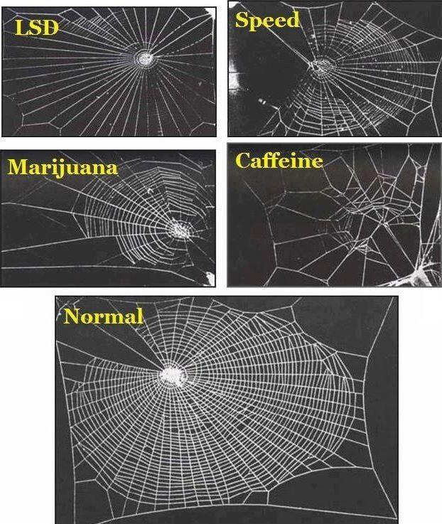 Los efectos de las drogas en las arañas