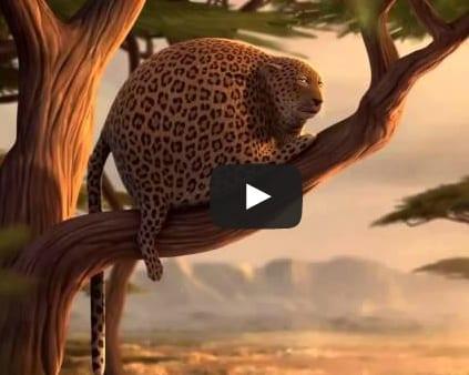 video animales comida rapida
