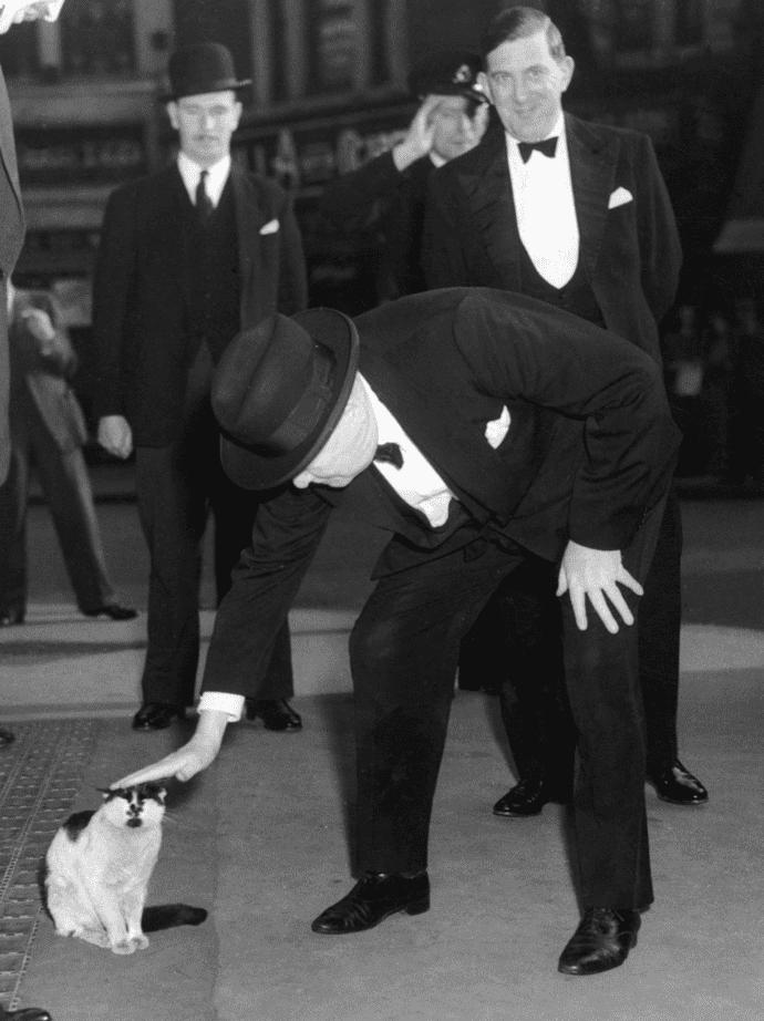 churchill y un gato