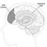 ¿Qué es lo que ocurre en nuestro cerebro cuando luchamos contra una tentación?