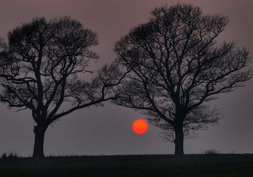 Historia de 2 árboles (Metáfora sobre el crecimiento personal)