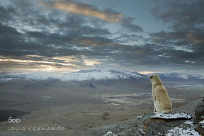 """""""Este perro apareció de la nada y nos siguió durante toda una semana de nuestro viaje de senderismo al interior del Himalaya... Cuando me levanté a las 4 am para subir al siguiente pico de 5000 metros de altura... lo encontré así . Se quedó 30 minutos en esa posición. """""""