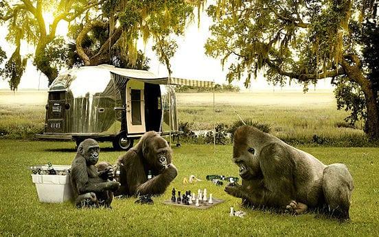 vida-como-ajedrez