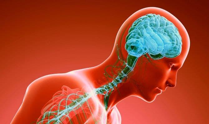 Sistema nervioso — Definición, funcionamiento y composición
