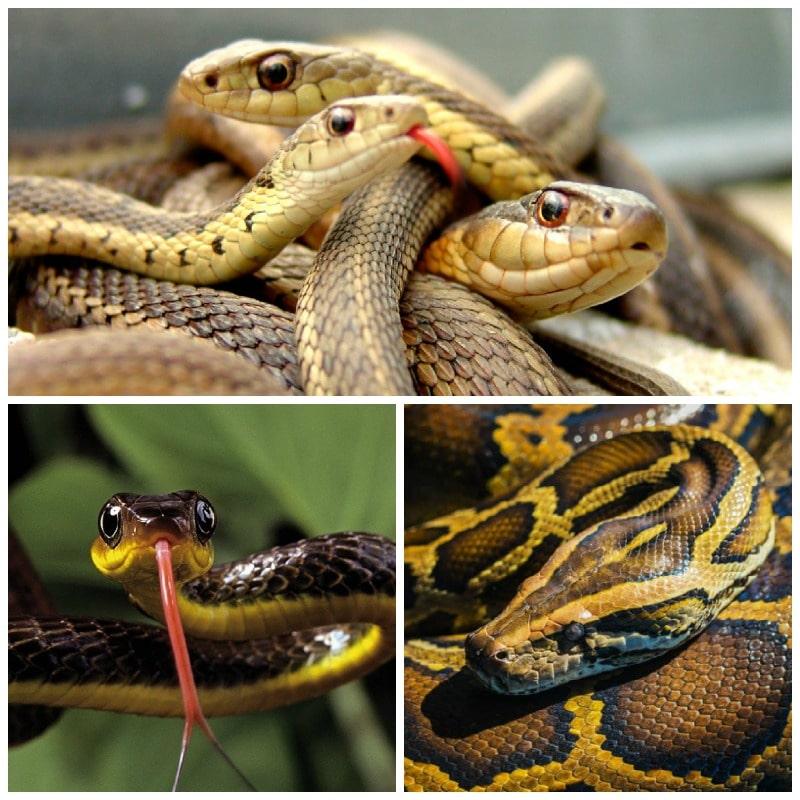 El significado de soñar con serpientes