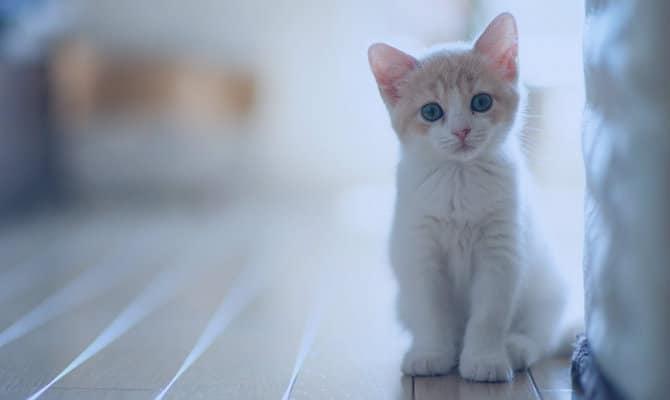 Conoce qué significa soñar con gatos y sus diferentes variaciones