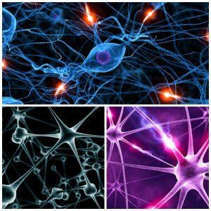 Tipos de neuronas con sus características más importantes