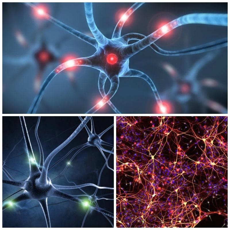 Resultado de imagen de Los procesos neuronales