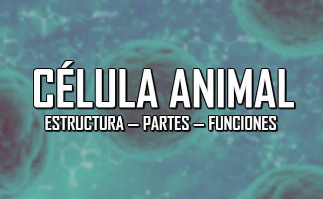 ¿Qué es la célula animal? — Estructura, partes y funciones