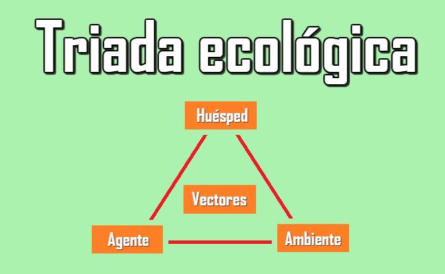 Triada ecológica: definición, elementos, funciones y ejemplos.