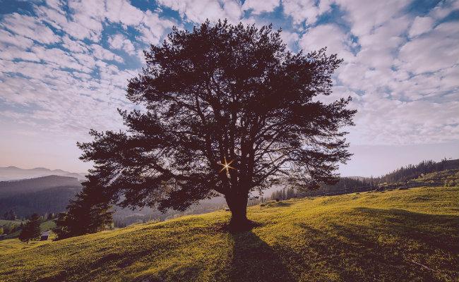 Descubre cómo es el ciclo de vida del árbol — Explicación para niños y adultos