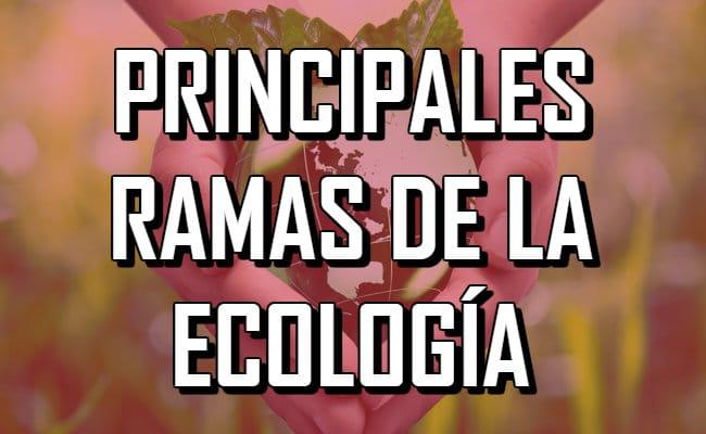 Qué es la ecología y cuáles son sus diversas ramas