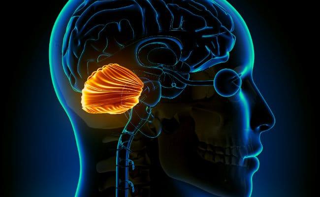 Características y funciones del cerebelo