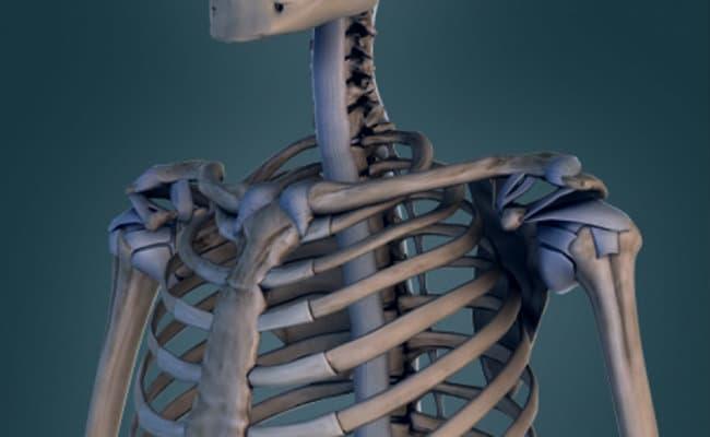 Principales enfermedades del sistema óseo y sus prevenciones