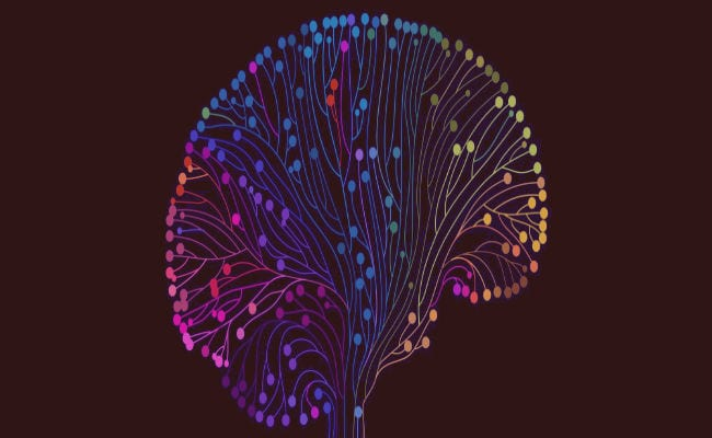 ¿Qué es el Lóbulo frontal? Características, Áreas, Funciones y Trastornos