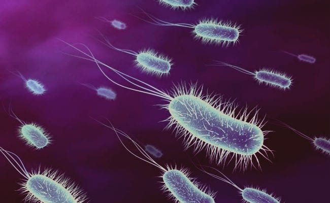Célula Eucariota Y Procariota Qué Son Y Que Las Diferencia