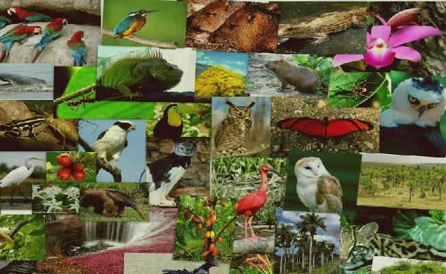 factores bioticos en el medioambiente