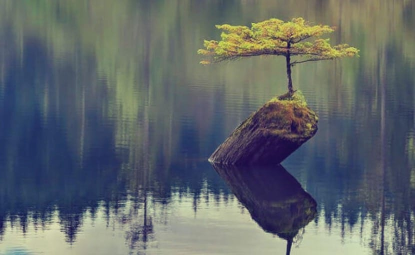 resiliencia natural