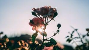 flor que simboliza el crecimiento pasivo