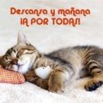 gato tierno para desear buenas noches