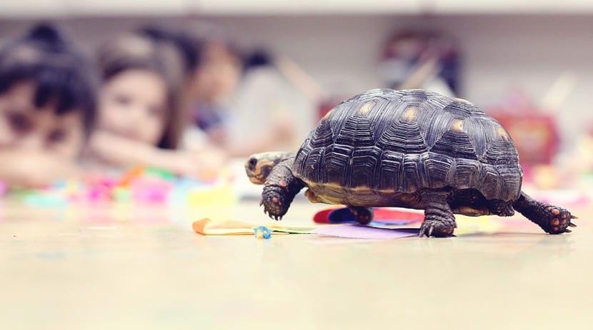 nenes mirando una tortuga para aprender de ella
