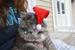 gato enfadado con la navidad