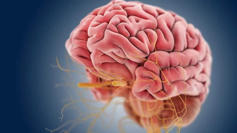 La afasia ocurre por daños cerebrales