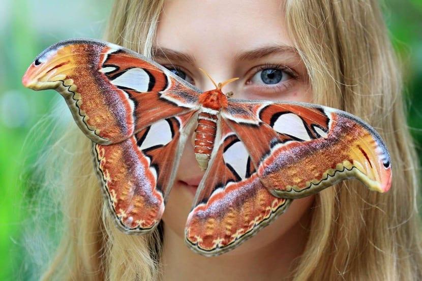 chica con una mariposa en la cara