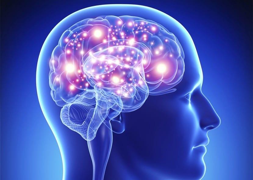 cerebro con memoria eidética