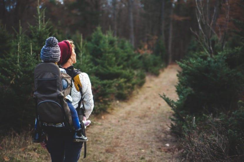 caminar por el bosque como pasion