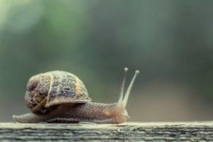 la paciencia en forma de caracol