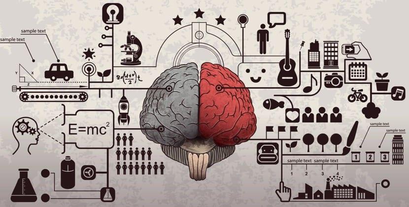el cerebro con inteligencias multiples