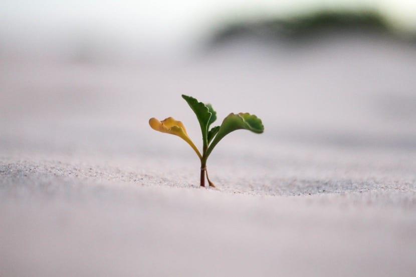 superar la adversidad