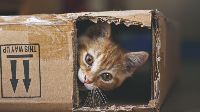 experimentos coductistas con gatos