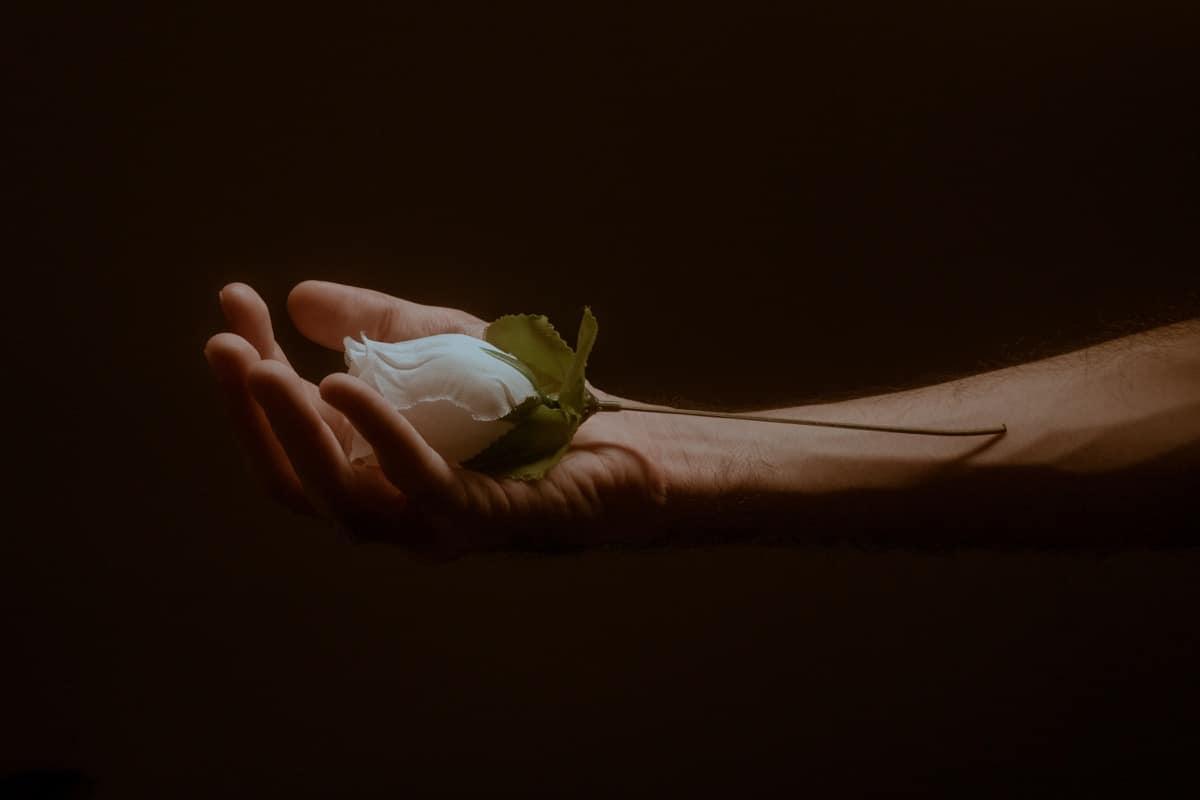 entrega de una flor blanca como dedicatoria de amor corta